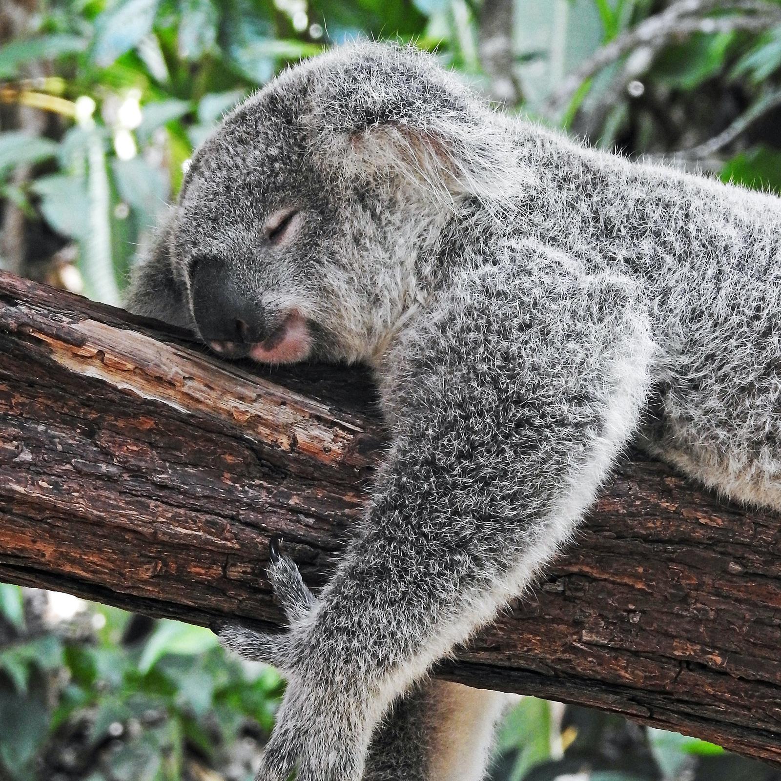Kleine Tiere brauchen mehr Schlaf als große. Elefanten kommen mit nur drei Stunden am Tag aus.