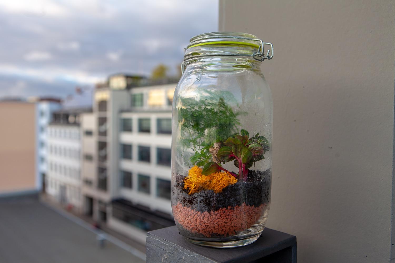 Pflegeleicht: Wenn du weder Platz noch Zeit für einen Garten hast, ist ein Flaschengarten die perfekte Lösung für dich.