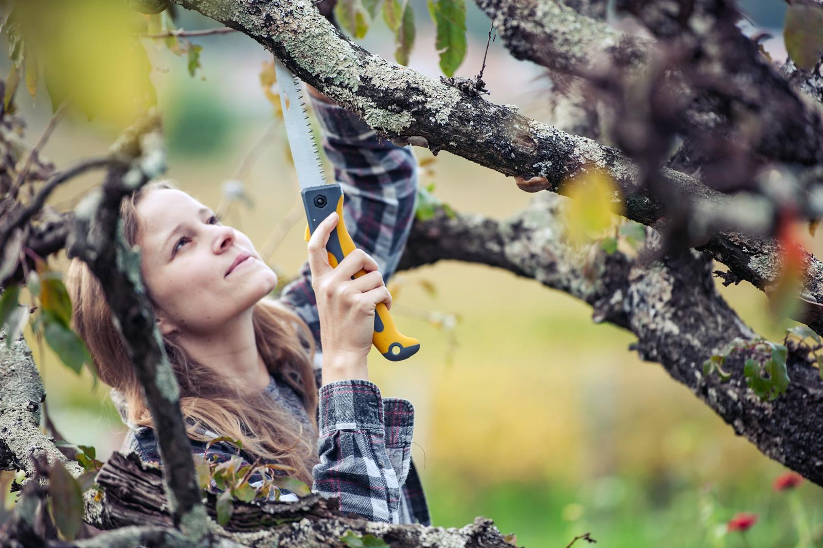 Bei Gartenarbeit mit Säge oder gar elektrischen Geräten sollte man immer besonders vorsichtig sein, denn sie sind eine häufige Unfallursache.