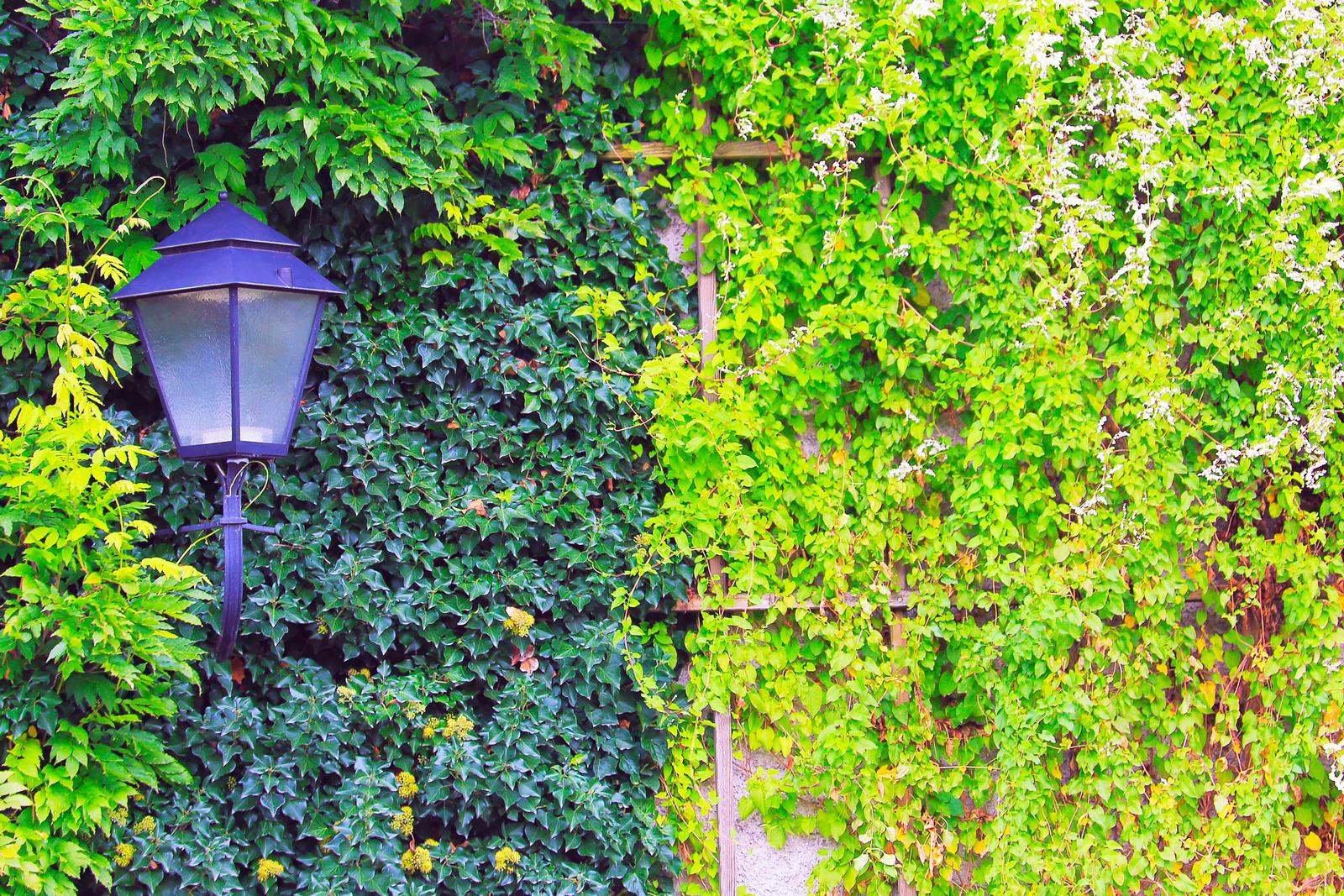 Natürlicher Schutz: Begrünte Fassaden sind der Witterung weniger ausgeliefert.