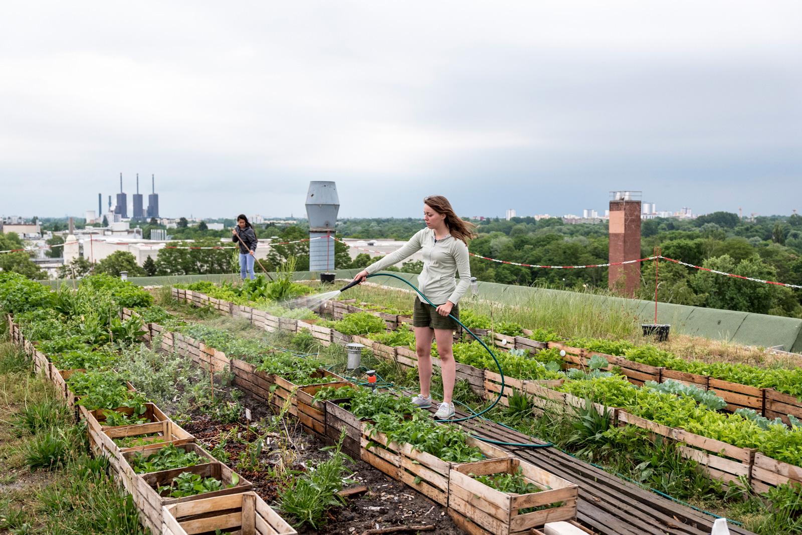 Trend Urban Gardening: Dachgarten in Berlin
