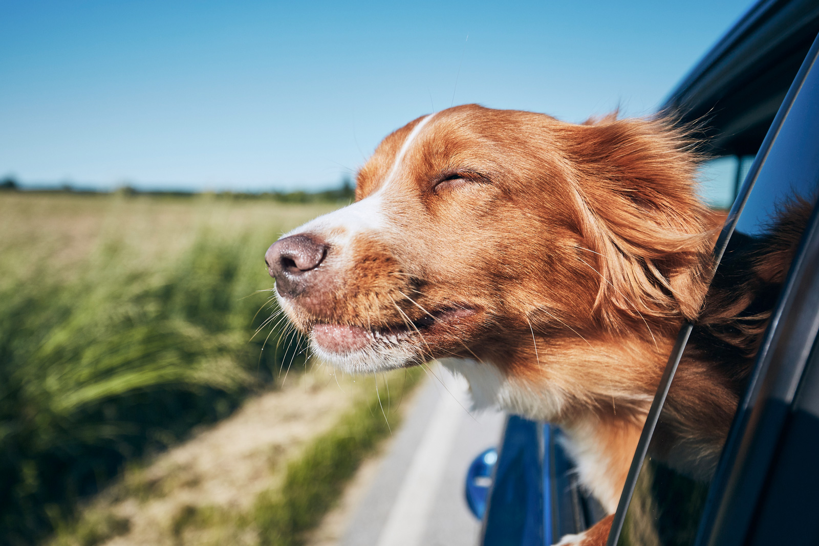 Auch der Hund darf mit: Verreisen mit dem Auto