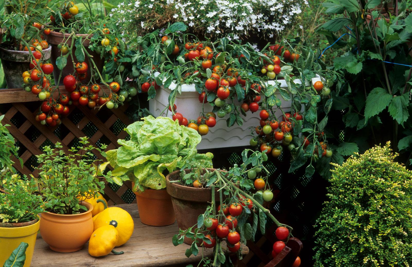 Auch Kräuter und Gemüse gedeihen auf dem Balkon.