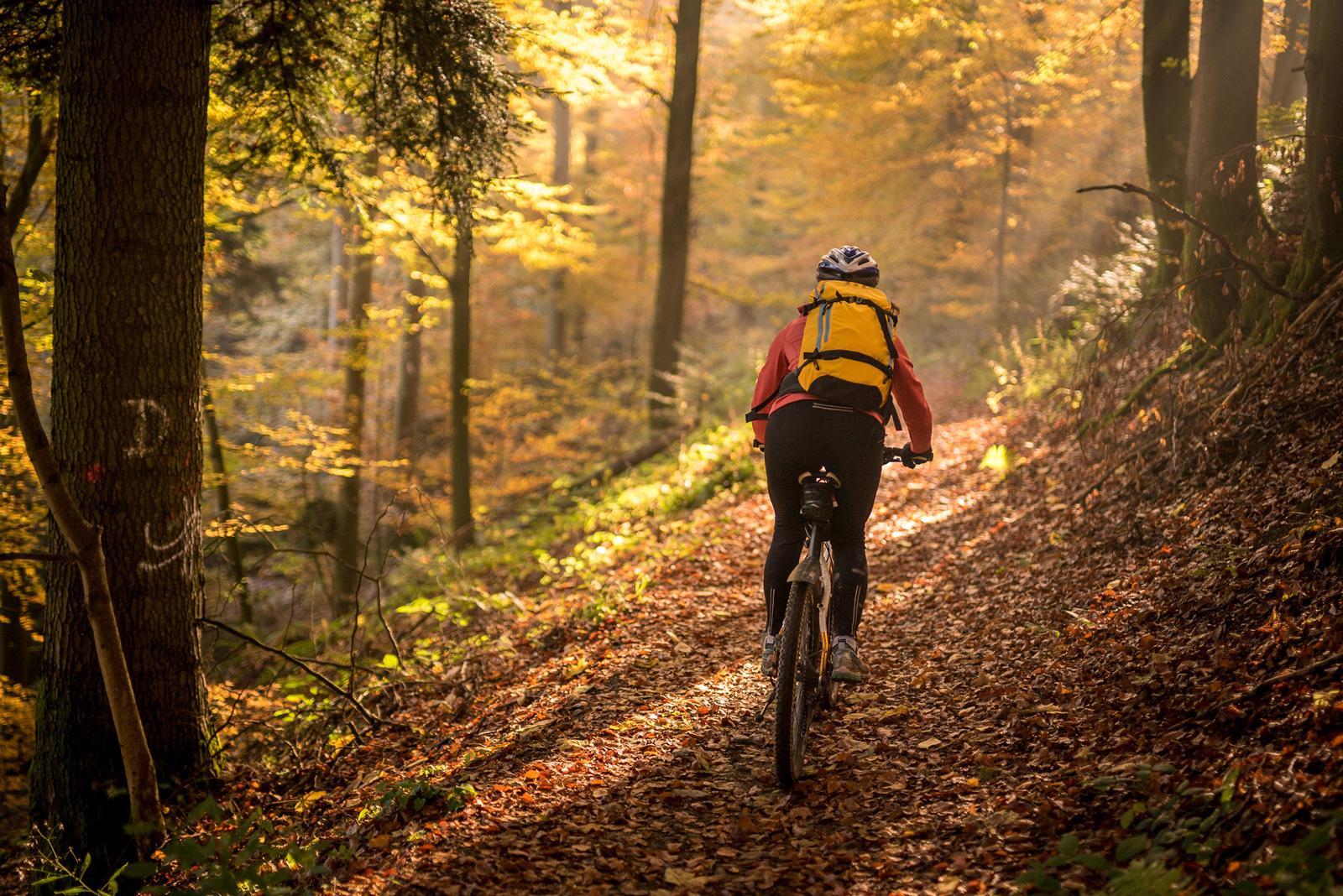 So schön ist der Wald nur im Herbst.