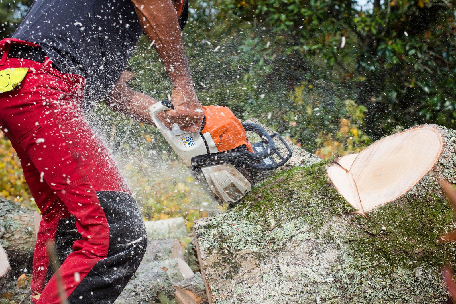 Beetle for Tech will nachhaltige Waldbewirtschaftung sicherstellen.