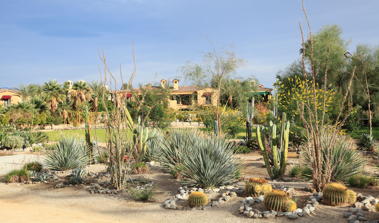 Wüstengarten in Palm Springs (USA)