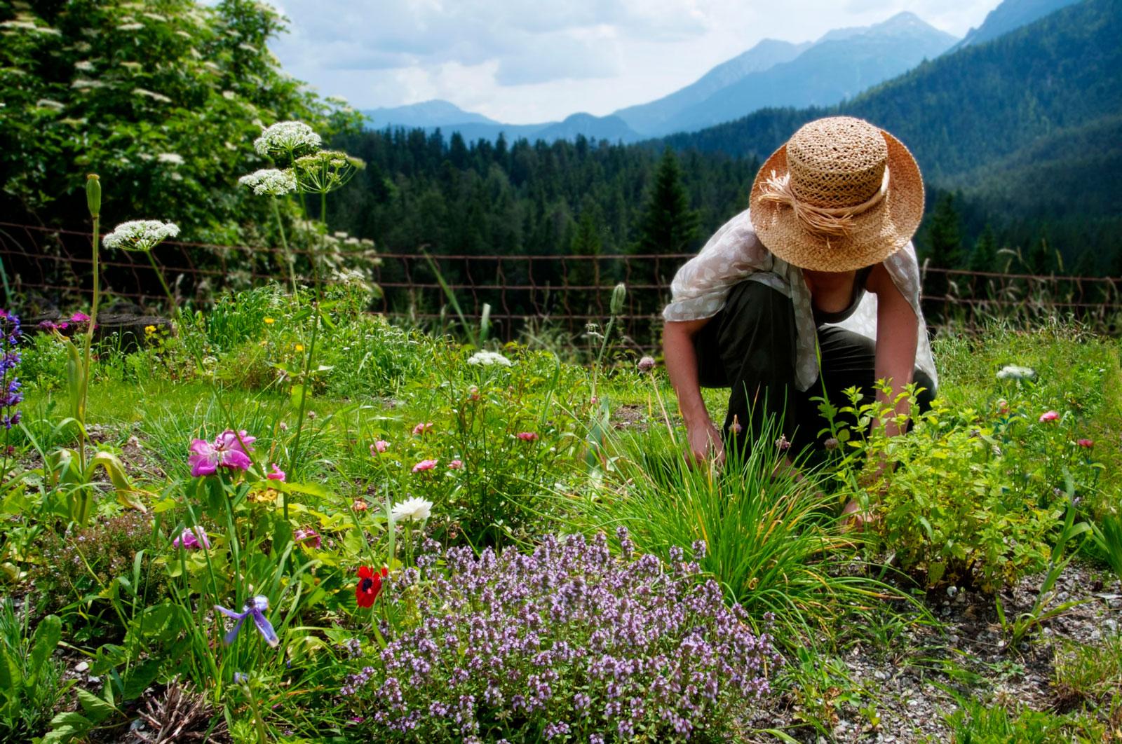 Frisch aus dem Garten: Selbst angebaute Kräuter schmecken nicht nur besser, sie bieten auch Bienen und Schmetterlingen ein zu Hause.