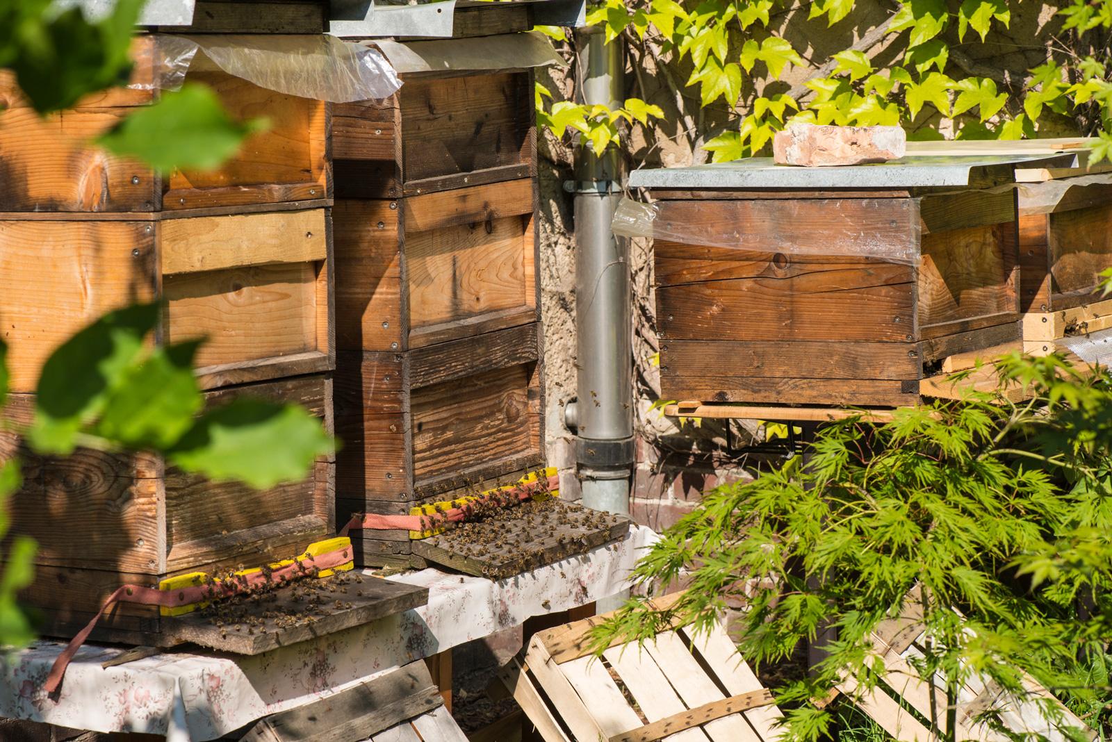 Bienenstöcke im Garten