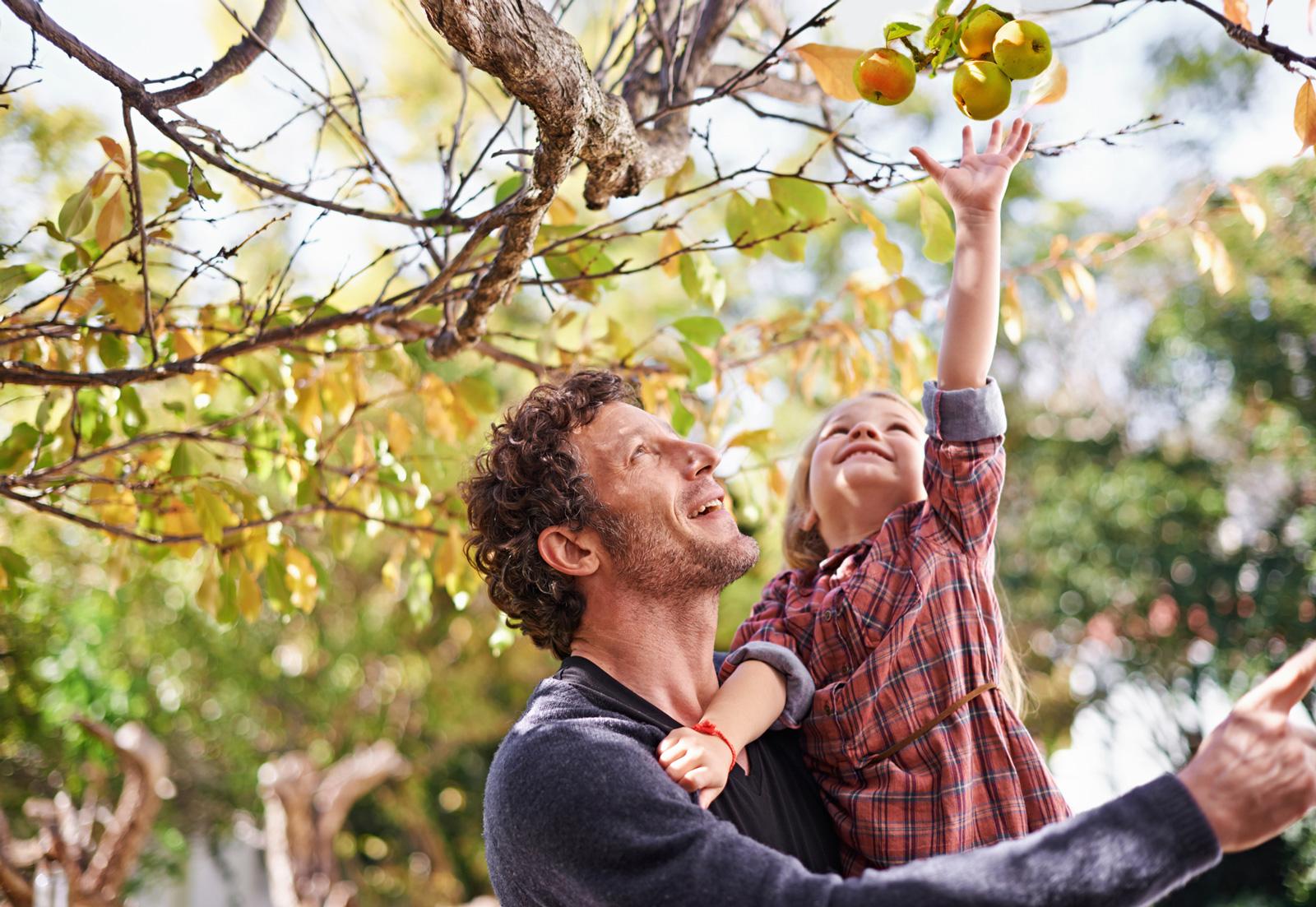 Ernte im Garten: Äpfelpflücken macht auch Kindern Spaß. Ein fester Halt ist beim Nachwuchs besonders wichtig.