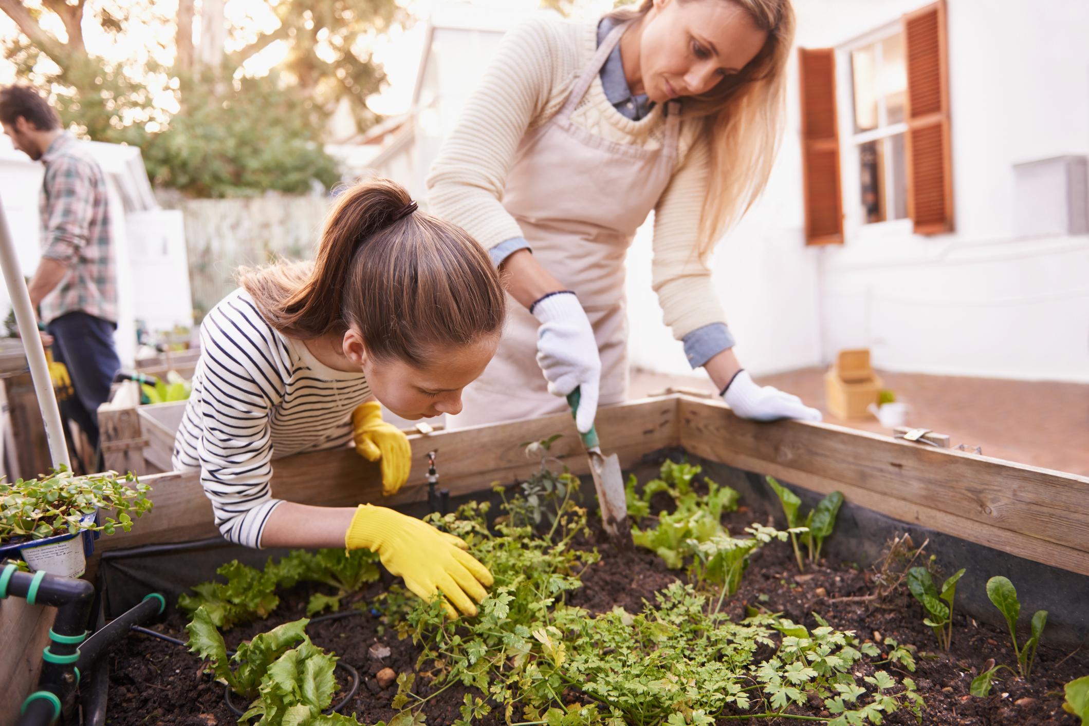 Ergonomisch: Mit Hochbeeten fällt die Gartenarbeit leichter und geht weniger auf den Rücken.