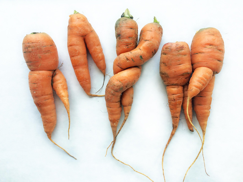 """Schmecken mindestesn genau so gut: """"unnormale"""" Karotten"""