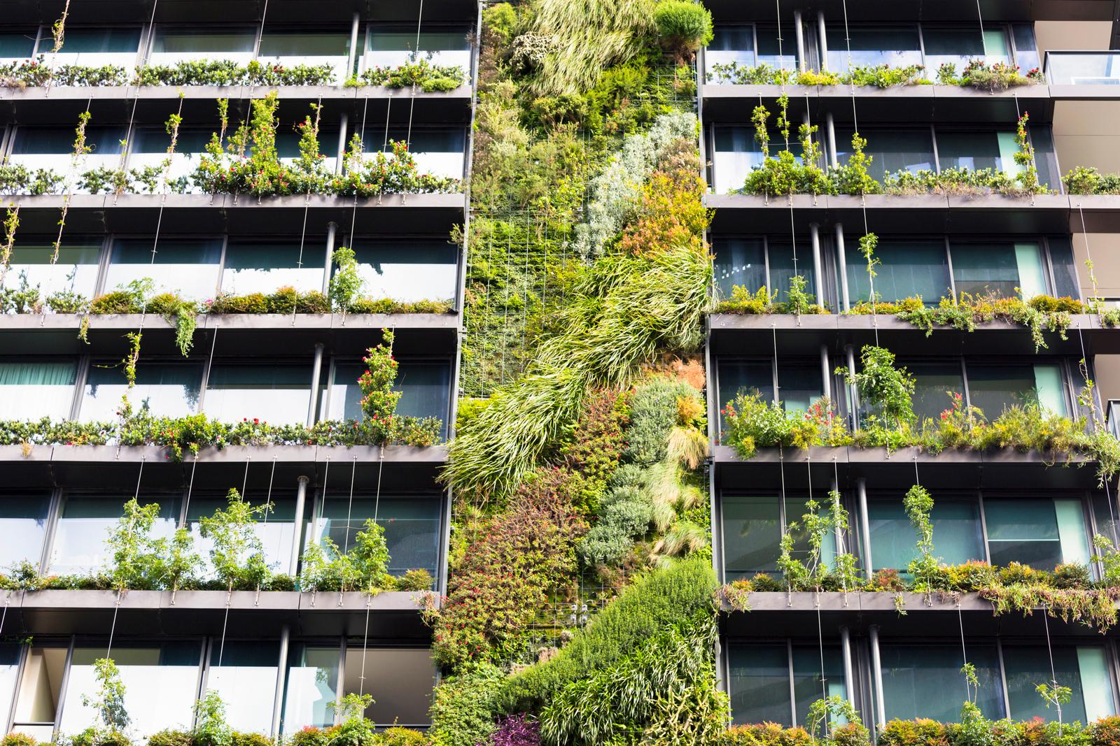 Zum Begrünen deiner Fassade kannst du zwischen vertikalen Lösungen und Kletterpflanzen wählen.