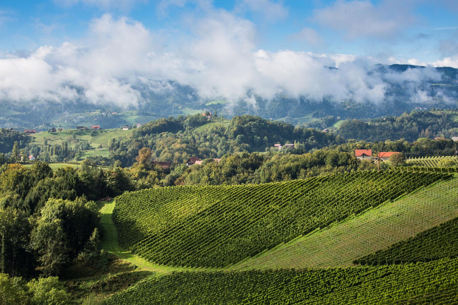 Weinberge an der Steirischen Weinstrasse