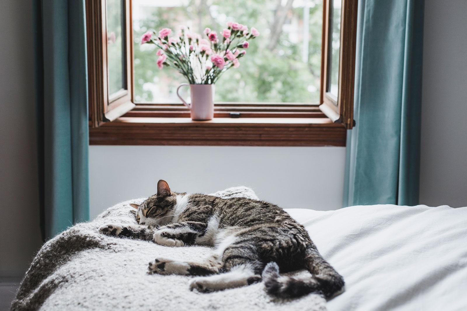 Frischluft: Wer morgens und abends durchlüftet, erhöht die Chancen auf einen gesunden Schlaf.