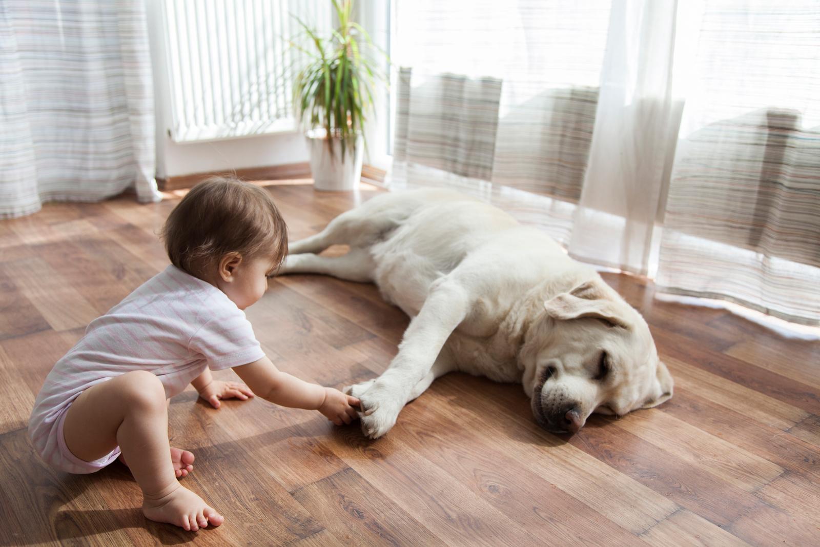 Wohngesund: Gerade mit Kleinkindern sollte der Boden möglichst frei von Schadstoffen sein.