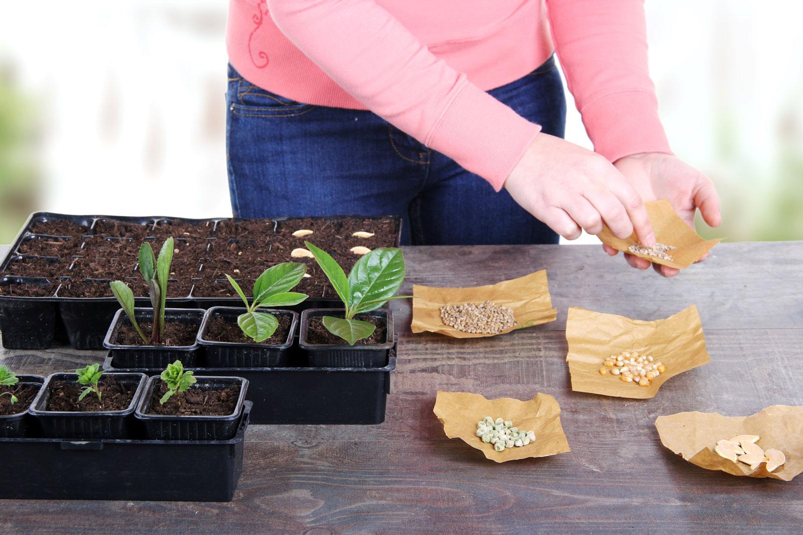 Kräuter selber züchten ist nicht schwer.