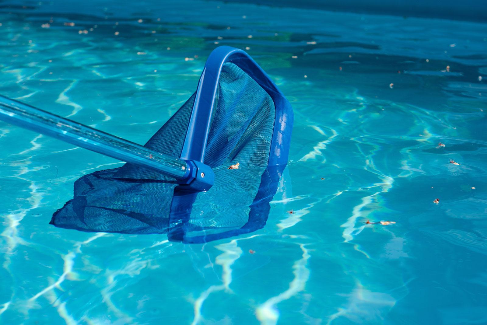 Regelmäßige Pflege: Mit einem Kescher kannst du Blätter aus dem Wasser fischen.