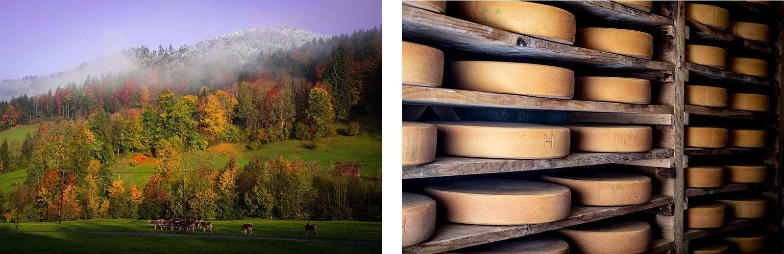 Landschaft und Käse geniessen: Käsestrasse im Bregenzerwald