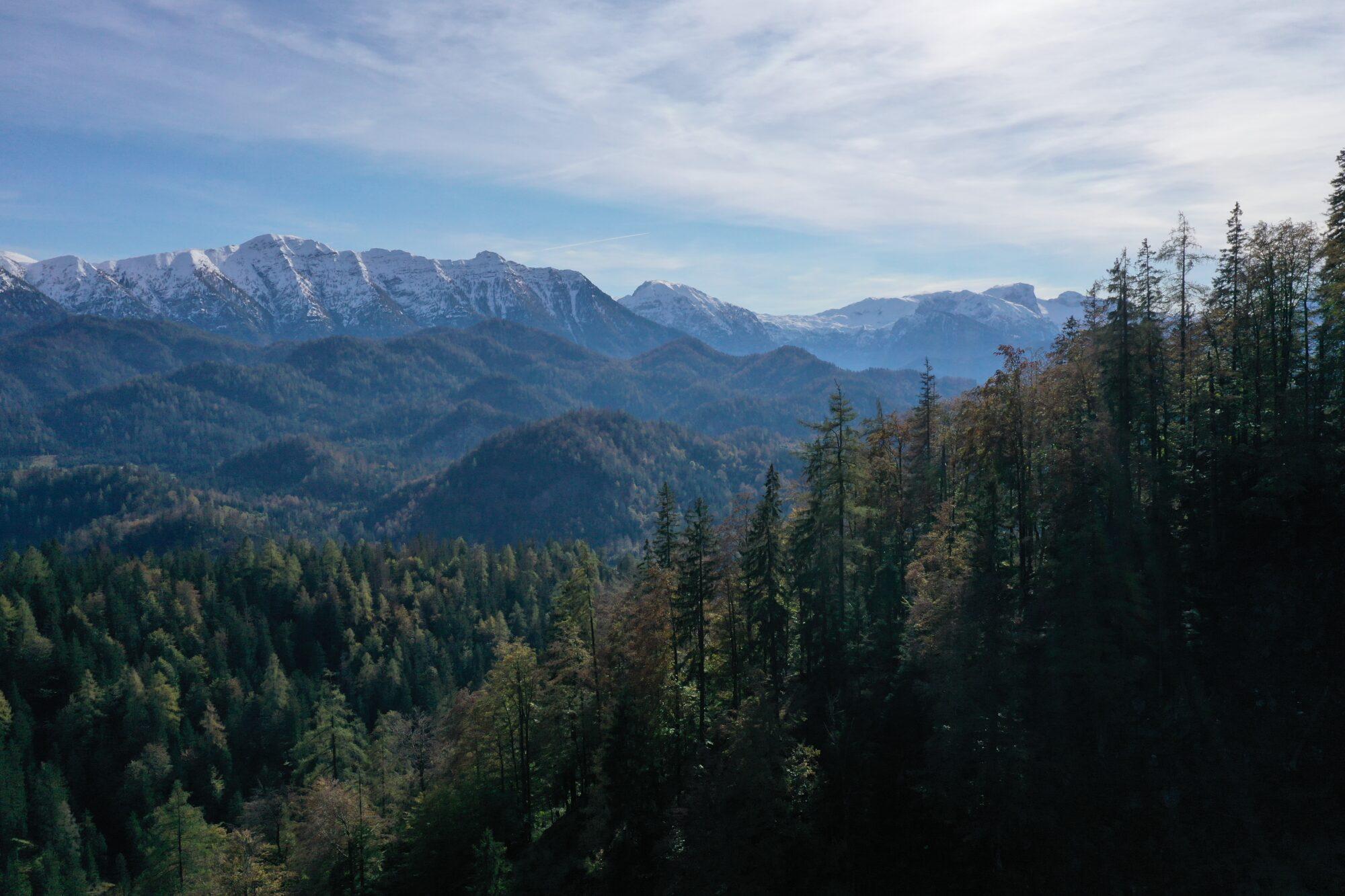 Blick ins Lassingtal aus dem Wildnisgebiet