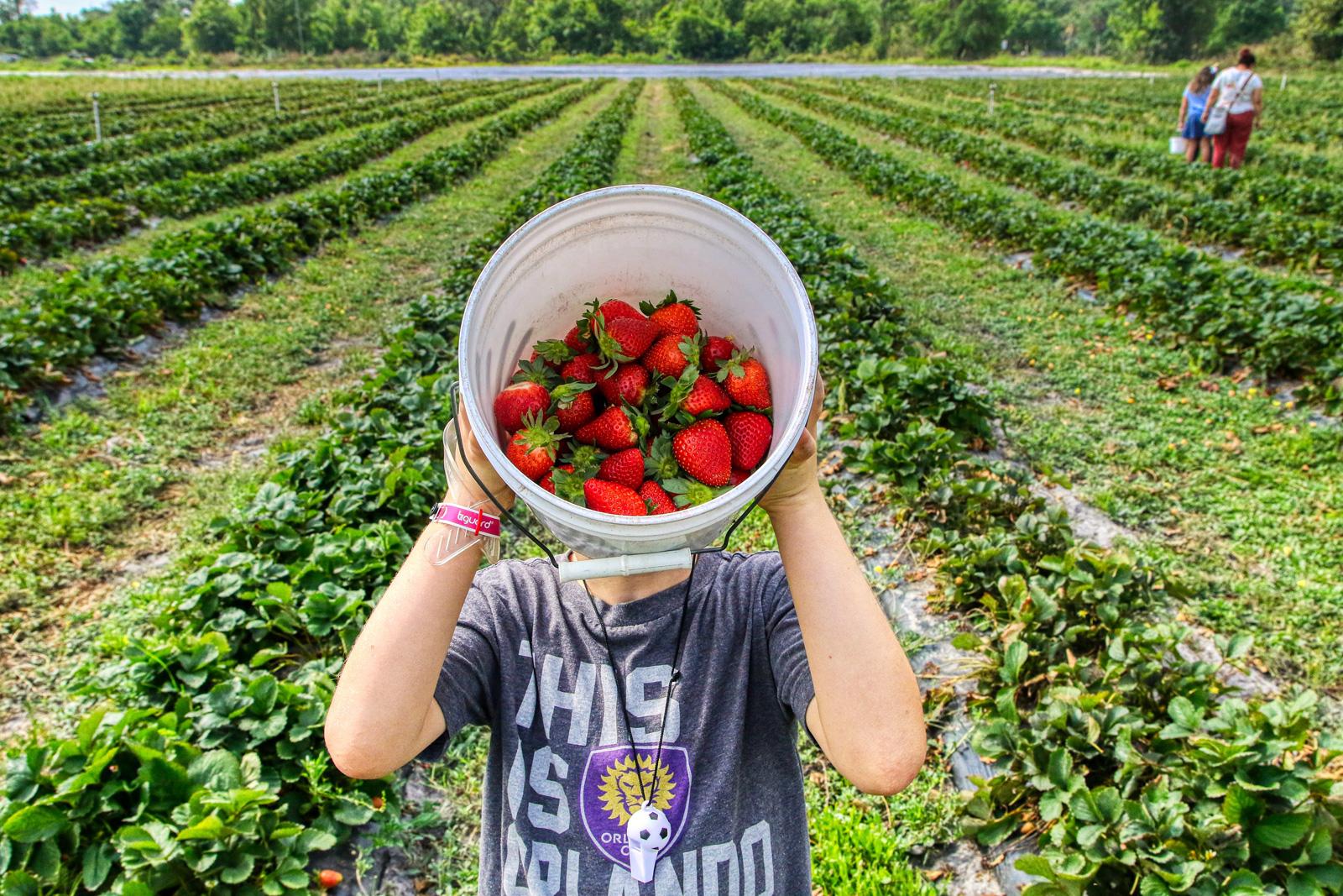 Mit Erdbeeren beginnt die Obstsaison.