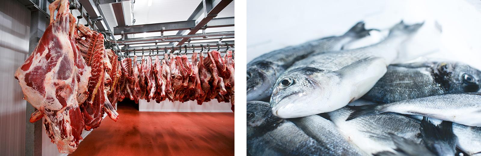 Eiweißlieferanten: Fleisch und Fisch