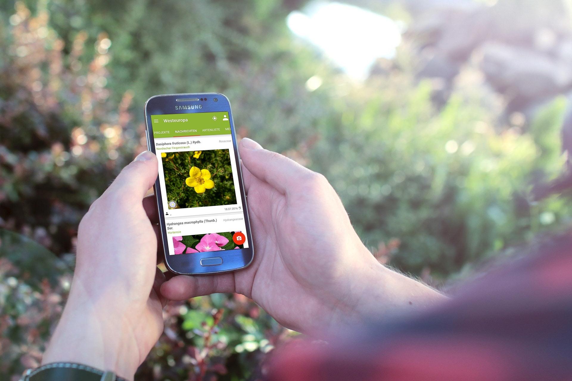 Schlauer mit PlantNet: Die App hilft dabei, Wildpflanzen zu bestimmen.