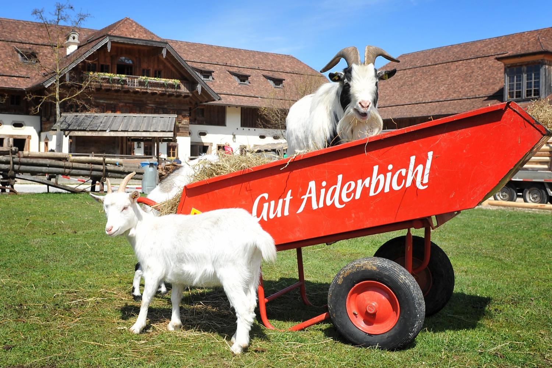 Vorbildliche Haltung: Viele Tiere dürfen auf Gut Aiderbichl frei herumlaufen.