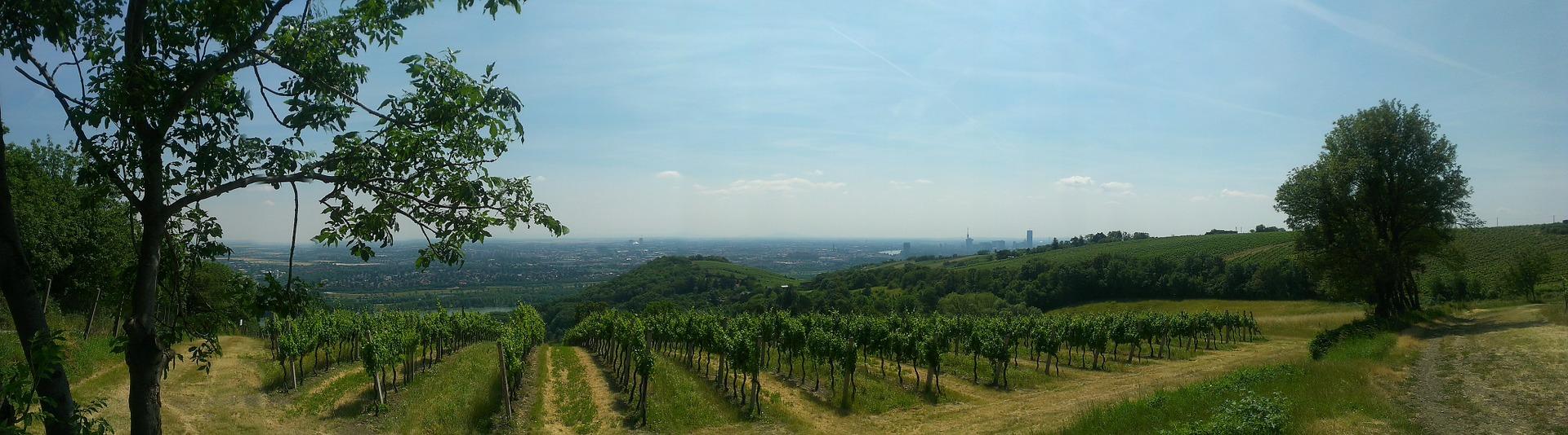 Großstadt und Natur - rund um Wien tun sich schöne Wanderwege auf