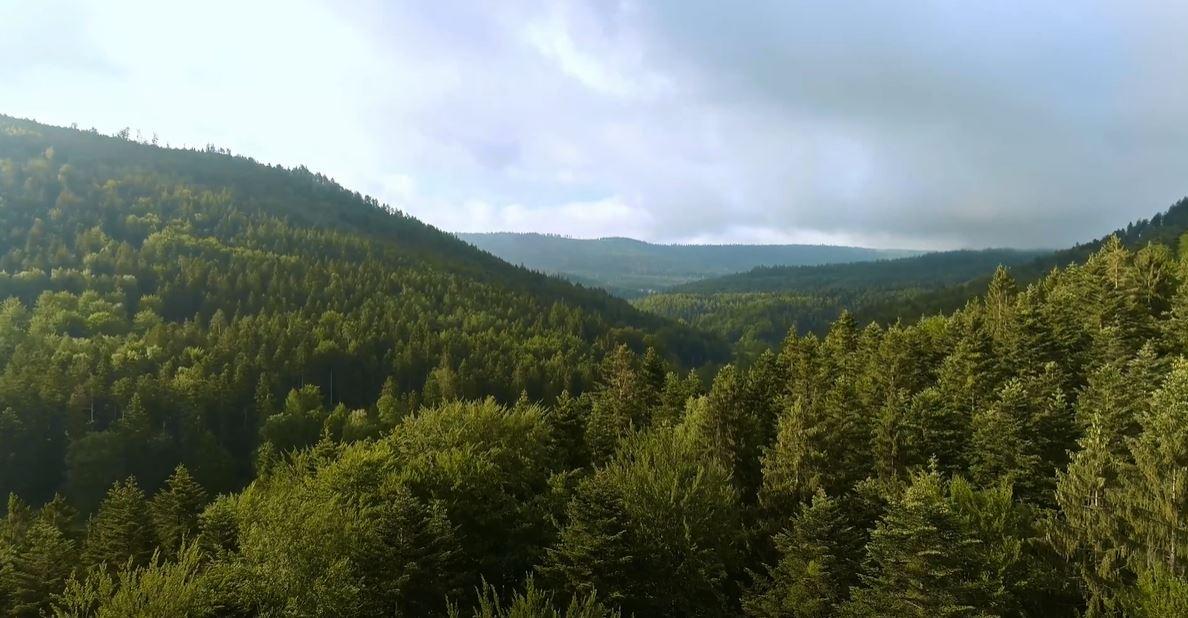 Wald: Vom Klimawandel betroffen und gleichzeitig Teil der Lösung. Das sagt Dr. Peter Mayer (BFW) in unserem Interview.