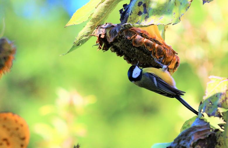 Im Winter unterstützt du die Vögel mit einer dichten Hecke und beerentragenden Gehölzen im Garten.