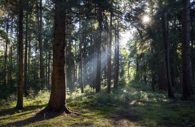 Beruhigende Wirkung: Der Aufenthalt im Wald lässt Blutdruck und Stresslevel sinken.