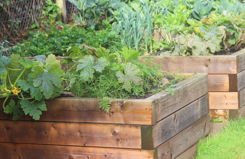 Selbst hängende Pflanzen gedeihen gut im Hochbeet - die Bodenfäule kann ihnen nur wenig anhaben.
