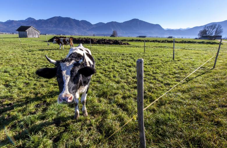 Im Bereich der Landwirtschaft soll weiter der einfache Einheitswert zur Anwendung kommen. Familienbetriebe profitieren sogar von der Reform.