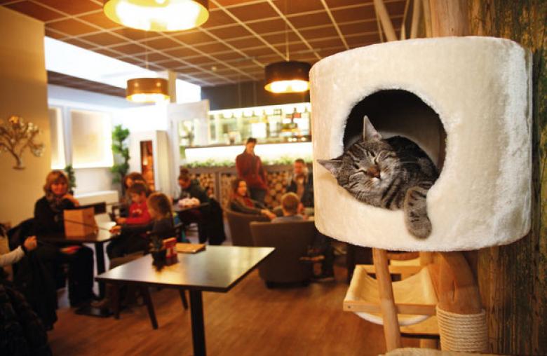 Katzen im Cafe – diese Idee verwirklichte Verena Kulterer in Klagenfurt.