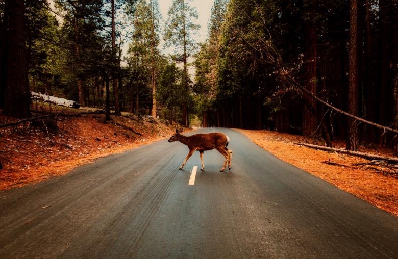 Achtung Wildwechsel! In der Morgen- und Abenddämmerung sind die Tiere besonders aktiv.
