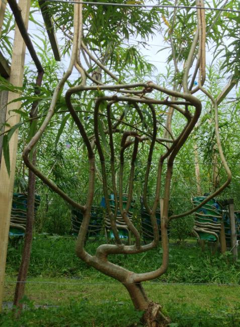 Naturgewachsenen Stühle sehen gut aus uns brauchen wenig Energie bei der Herstellung.