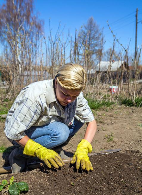 Faustregel: Gemüsearten aus der gleichen Pflanzenfamilie nicht zusammensetzen. Sie sind genetisch ähnlich, deshalb übertragen sie leichter Krankheiten und zehren den Boden aus.